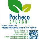 PACHECO SPURGHI