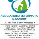 AMBULATORIO VETERINARIO MAGGIORE