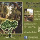 L'OLIVO QUERCETANO - C/O Associazione Turistica Pro Loco