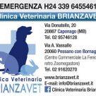 CLINICA VETERINARIA BRIANZAVET