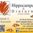 HIPPOCAMPUS & DINTORNI