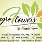 INGRO FLOWERS
