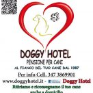 DOGGY HOTEL