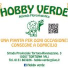 HOBBY VERDE