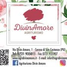 DIVIN AMORE