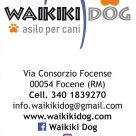 WAIKIKI DOG