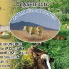 AZIENDA AGRICOLA TESSITORE