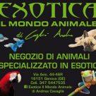 EXOTICA IL MONDO ANIMALE