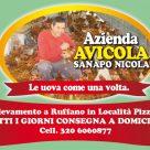 AZIENDA AVICOLA SANAPO NICOLA
